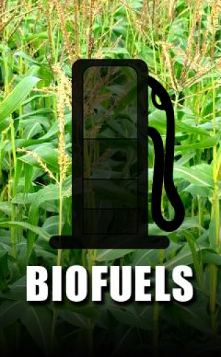 essay on biofuels a surreal argument for biofuels david cronin